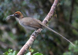 Papua Neuguinea