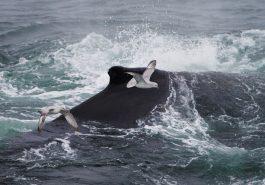 Antarktis – Falkland Inseln – Südgeorgien